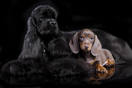 dogs sitting in front of black background photo