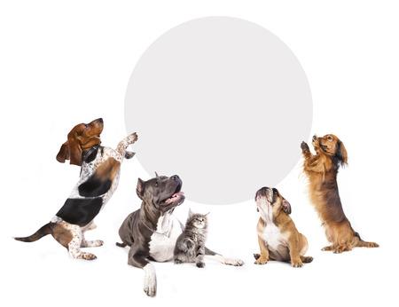 Gatos y perros, con un cartel de corcho Foto de archivo - 38939141