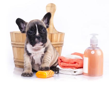 champu: tiempo de baño cachorro - cachorro de bulldog francés en el lavabo de madera con espuma de jabón