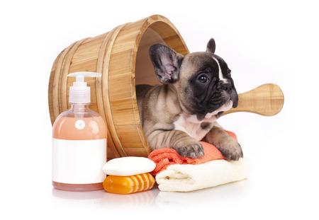aseo: Perrito del dogo francés en el lavabo de madera