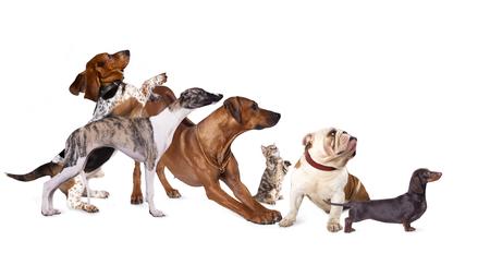 犬のプロフィール、展示ブースでは、犬のグループ