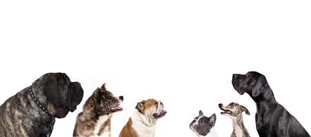 犬のグループを見上げる