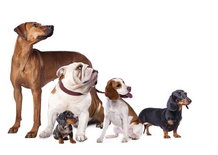 犬や猫のグループ 写真素材