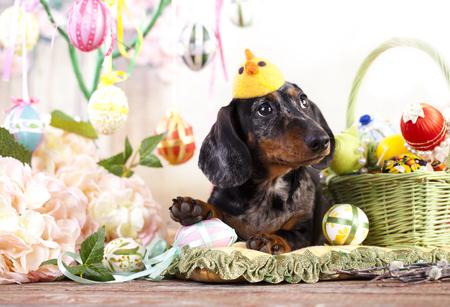 Dachshund rabbit and Easter eggs Archivio Fotografico
