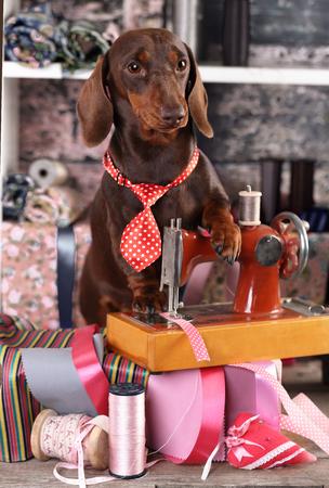 ネクタイとミシン仕立て屋 dogsFashion デザイナーのダックスフント