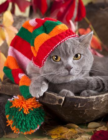 gnome の帽子の中の猫