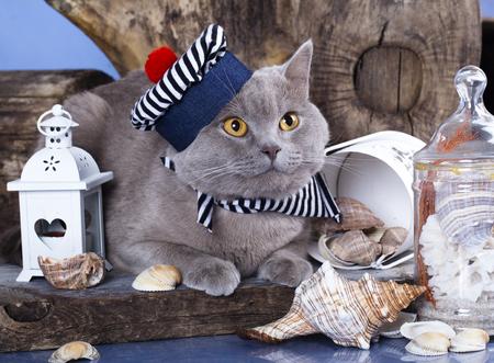 セーラー猫 写真素材