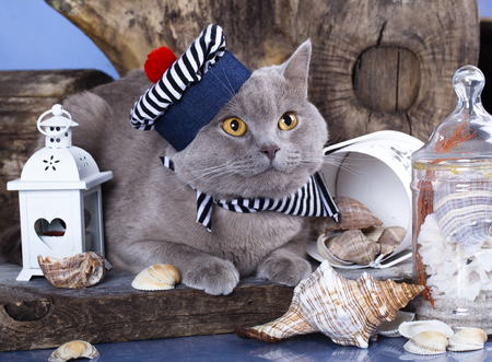grey cat: sailor cat Stock Photo