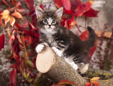 木に秋は紅葉の中で子猫