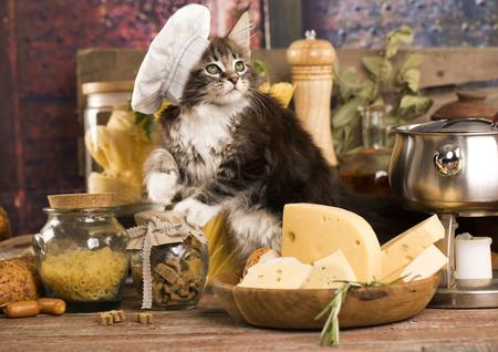 子猫猫クック クックのキャップで 写真素材