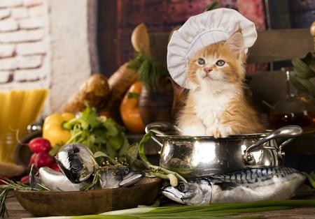 料理人の帽子の子猫 猫料理