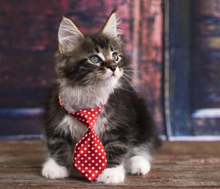 ほとんどの紳士の同点で子猫