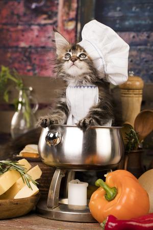 メインクーン子猫と魚 写真素材