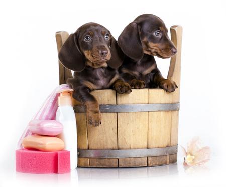 浴槽で子犬を洗浄、手入れをすること