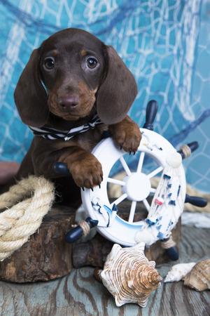 ダックスフンド子犬の船乗りと海の装飾