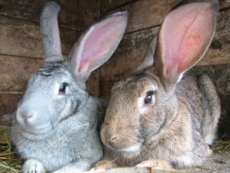 grey and brown rabbits sitting in the hutch Standard-Bild