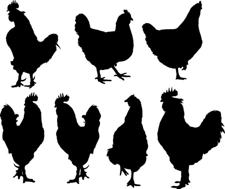 vector silhouette of group hens and roosters  Çizim