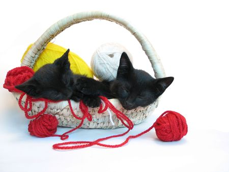 two kitties sleeping in the basket with yarn for knitting