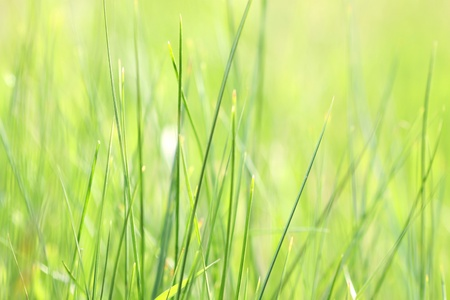 light green grass abstract background