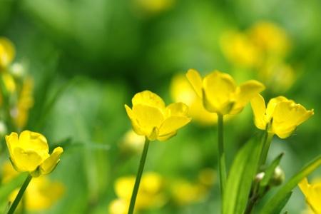 Gelbe Blüten auf grünen abstrakte Hintergrund, verschwommen leuchtenden Farben Standard-Bild - 9547067