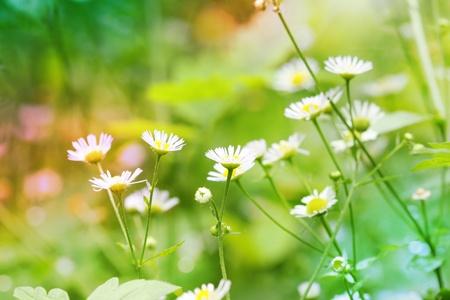 Abstrakte Blumen Hintergrund Standard-Bild - 10443084
