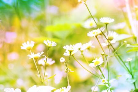 Abstrakte Blumen Hintergrund Standard-Bild - 10443085