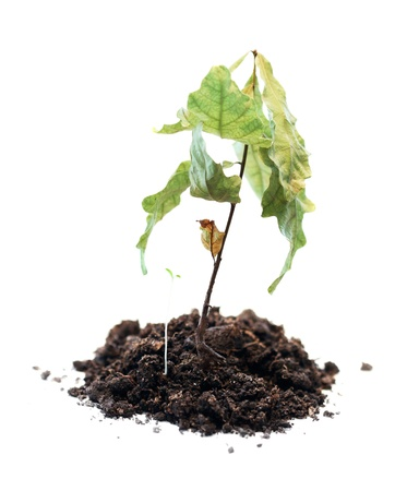 green plant withered, death of growth, dead plant Stock Photo - 10533685