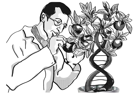 modification: Genetic tree Illustration