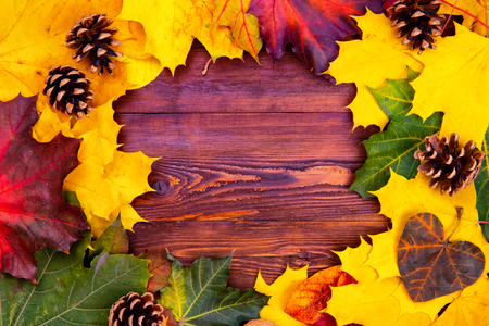 Autumn background of yellow and colored leaves, cones and nuts. place for text. Imagens