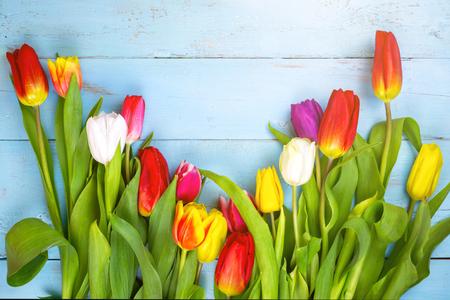 Rosa Tulpen auf hölzernem blauem Hintergrund. Empfängnisfeiertag, 8. März, Muttertag. Frühlingshintergrund