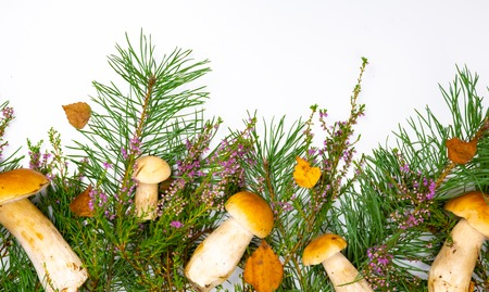 Forest picking mushrooms in wickered basket top view copy space. Fresh raw mushrooms Stockfoto