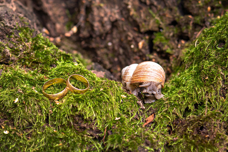 wedding rings newlyweds in the nature, lie on the moss next to the snail. place for text