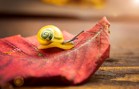 a small yellow snail on the autumn leaf. macro. place for text 스톡 콘텐츠