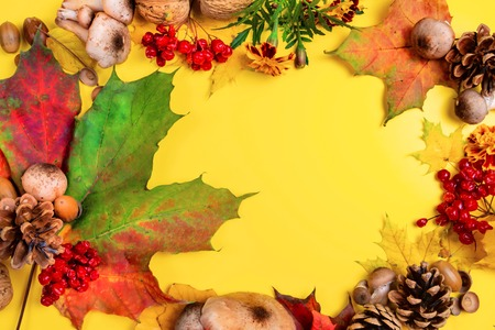 Autumn background with mushroom and colored leaves. Autumn Day.seasonal fruits. nature. place for text