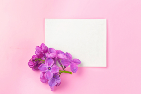 beautiful dark purple fresh lilac on the pink background, purple background, background for greetings, greeting card, mothers day. womens day, spring background, place for text, top view
