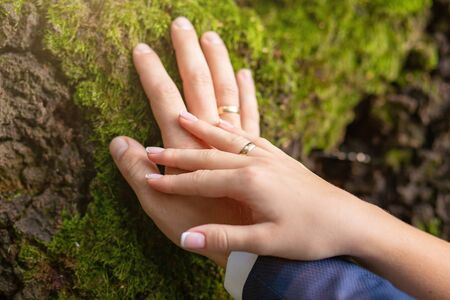 the hands of the bridegroom with the wedding rings, on the tree whilethis moss. Without a face. Close-up Imagens