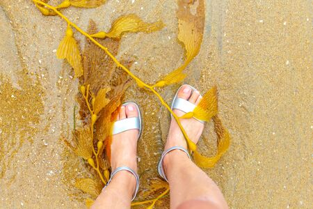 Yellow beautiful seaweed on the beach in California. seaweed in the sand. place for text 스톡 콘텐츠