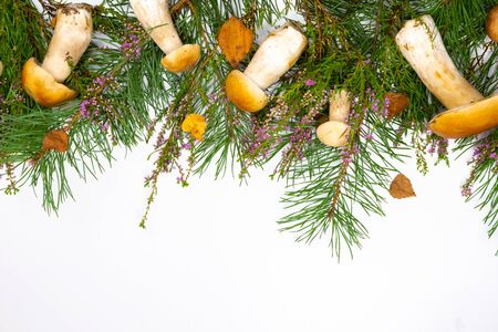 Forest mushrooms in a basket. White mushrooms. Autumn background with mushrooms and forest foliage on a white background. place for text.