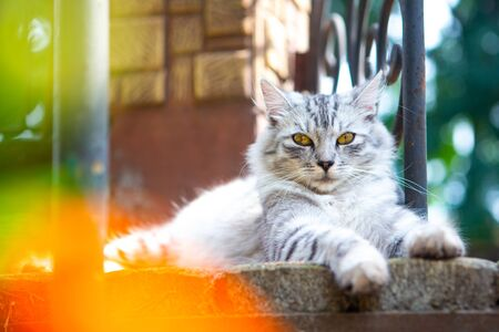gray cat lies on the stairs between the flowers Stok Fotoğraf
