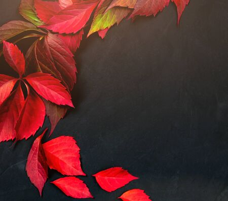 autumn background. red leaves on black textured background. fallen leaves. top view. place for text