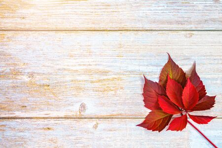 Autumn background. red ivy leaves on a wooden base. place for text.