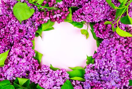beautiful dark purple fresh lilac on the pink background, purple background, place for text, top view