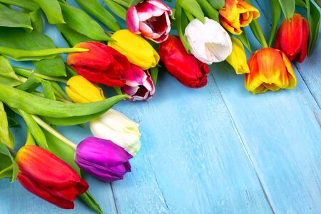 Bouquet of tulips on blue wooden table. Happy womens day. 8 March., Mothers Day. Flat lay and copy space Фото со стока