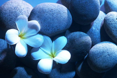 Pebbles and flowers