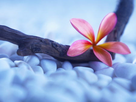 flower and pebbles resting on wood with blue background