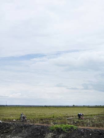 Farmer working in a paddy field and bycicle on the left side Stockfoto