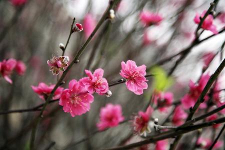 Cherry blossom at the park Banco de Imagens
