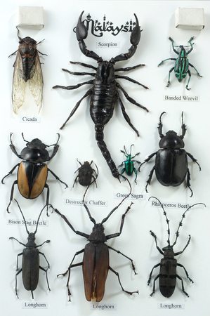 images of the various insect Stock Photo