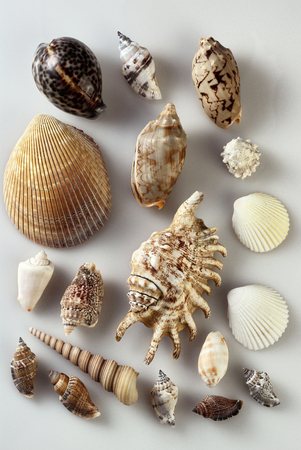images of the various sea shell on the plain backkground