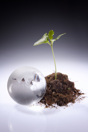 glass globe and a young plant Stock Photo